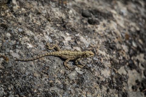 Eine der unzähligen Reptilien